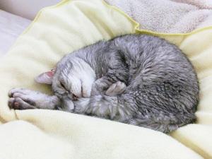 猫の寝相は謎