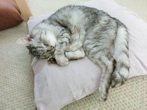 後ろ足が抱き枕