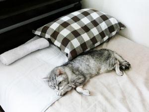 人が寝る場所に…