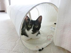 猫トンネルの中