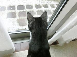 初めて見る雪?