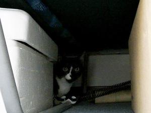 ベッド下に避難