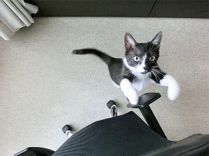 椅子登りチャレンジャー