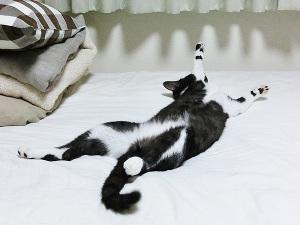 前足浮いたまま寝