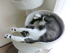 たまにキャットタワーで昼寝